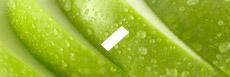 E-liquide saveur pomme