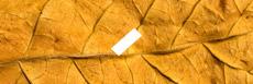 E-liquide saveur tabac FR original