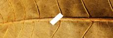 E-liquide saveur tabac USA classic