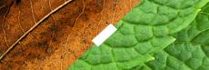 E-liquide saveur tabac menthe