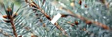 E-liquide saveur Sequoia