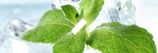 E-liquide saveur menthe fraiche